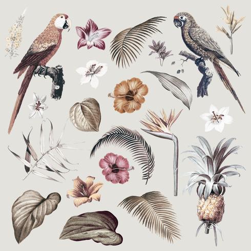 Ilustración de follaje de guacamayo