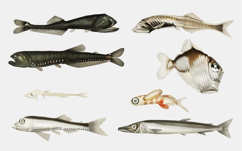 Deep sea fish varieties