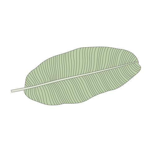 Illustration of a banana leaf