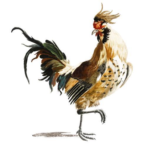 Illustration vintage d'un coq