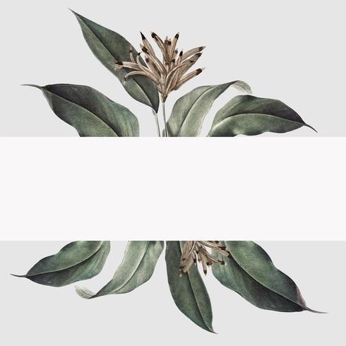 Tropical plant mockup illustration
