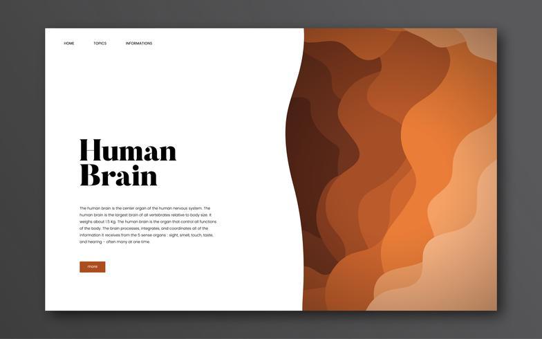 Informatie over de menselijke hersenen grafische informatie