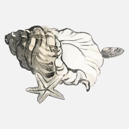 Étoile de mer et Conchby K? No Bairei (1844-1895). Amélioré numériquement de notre propre édition originale de 1913 de Bairei Gakan.