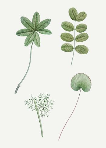 Olika gröna blad