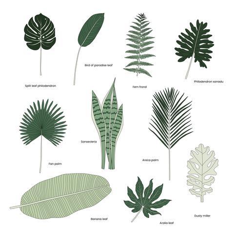 Colección de hojas tropicales ilustradas