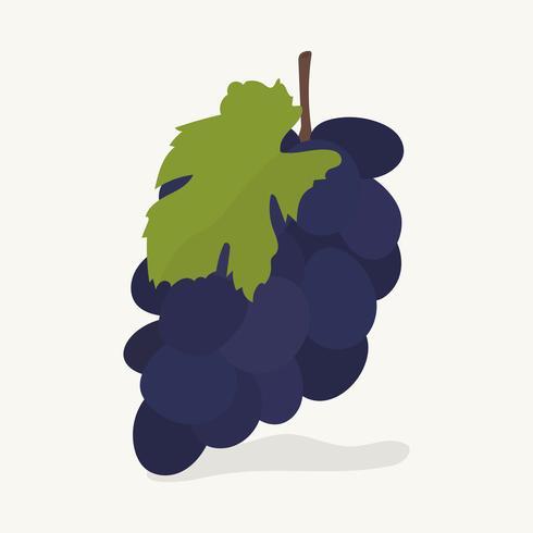 Hand gezeichnete Traubenfruchtillustration