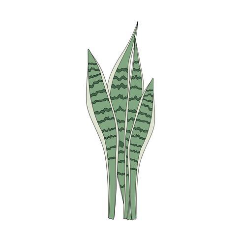 Illustration d'une feuille de Sansevieria