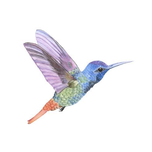 Colibri dessiné à la main isolé sur fond blanc
