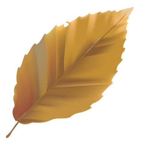 Abbildung des Blattes getrennt auf weißem Hintergrund