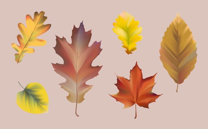 Coleção de vetor de folhas de outono
