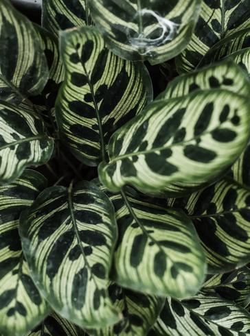 Closeup, de, folha verde, fundo