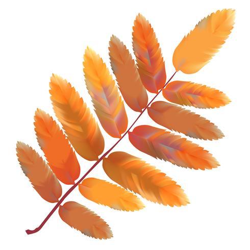 Illustration av löv isolerad på vit bakgrund