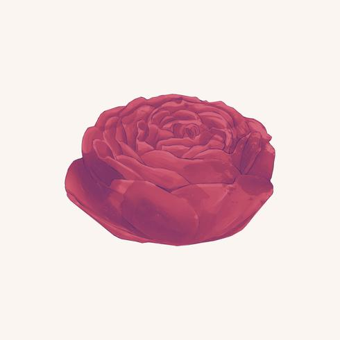 Illustration de dessin fleur rose rouge
