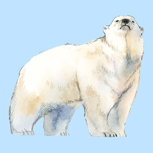 Polar bear watercolor style vector