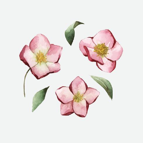 Fleurs d'hellébore peintes par un vecteur aquarelle