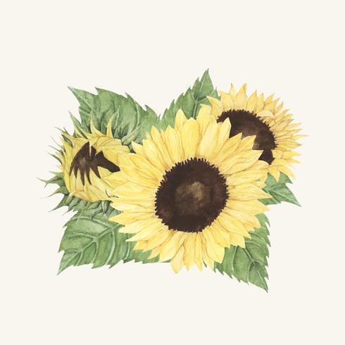 Hand gezeichnete Sonnenblume lokalisiert auf beige Hintergrund