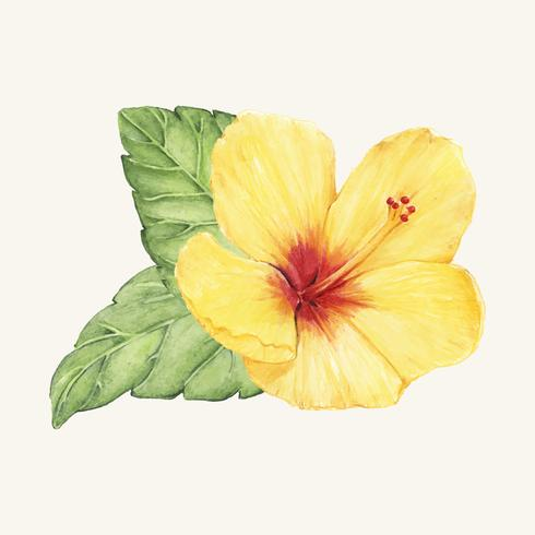 Vector de flores dibujadas a mano aislado