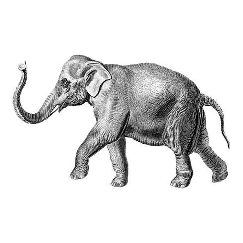Ilustrações vintage de Elephan