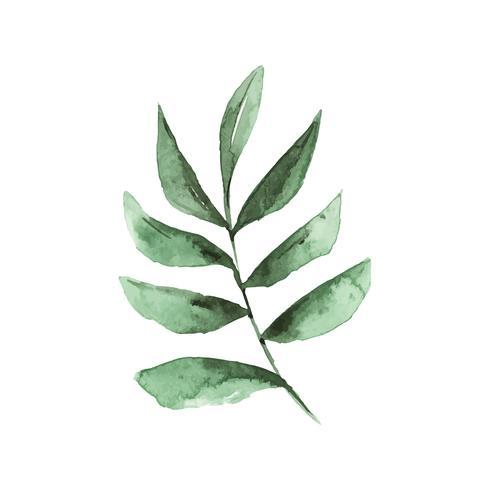 Smilax gren akvarell stil vektor