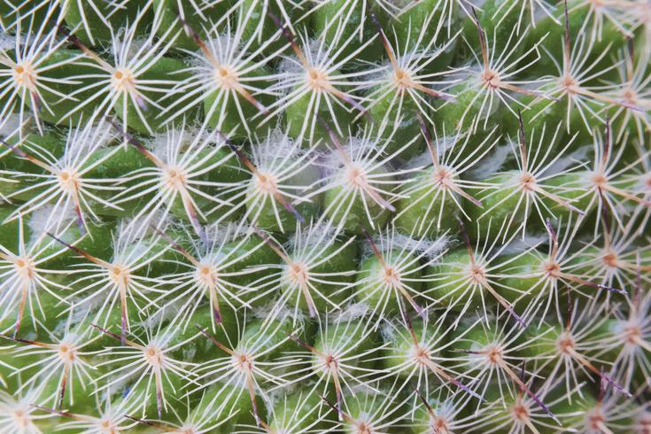 Gros plan du papier peint de l'usine de cactus