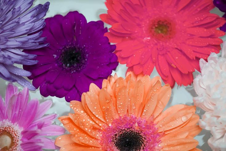 Primo piano di fiori colorati che galleggiano sull'acqua