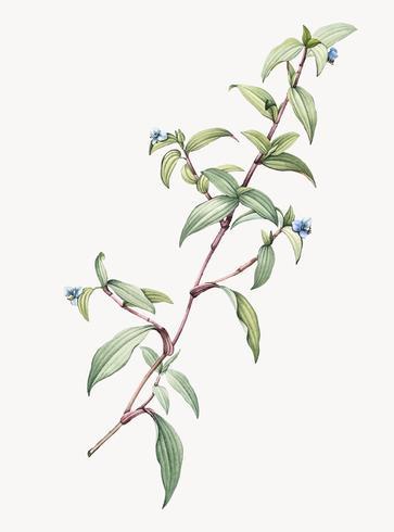 Ilustração Vintage de Birdflower diaflower