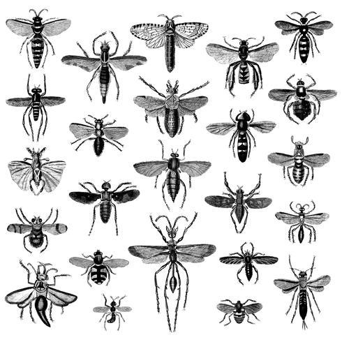 Ensemble d'illustrations de divers insectes