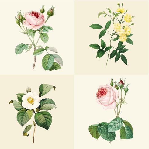 Conjunto de lindas rosas florescendo