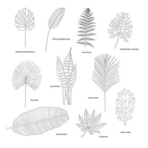Samling av illustrerade tropiska löv