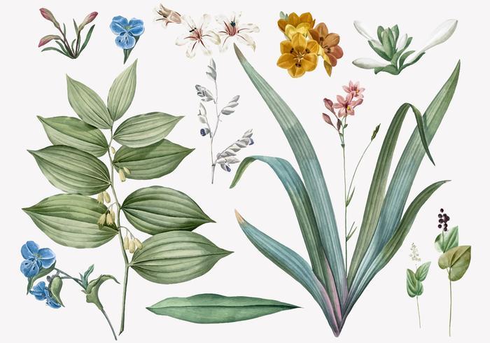 Växt och blommor