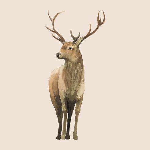 Man hjort målade av vattenfärg vektor
