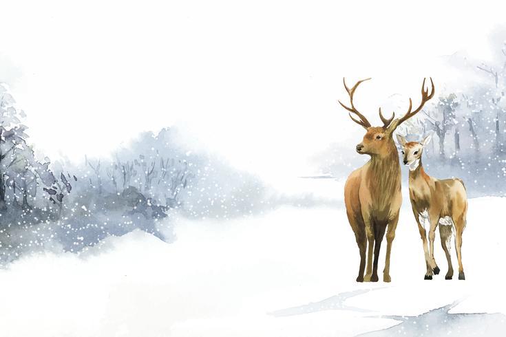 Handdragen par hjort i en vinter landskap vattenfärg stil vektor