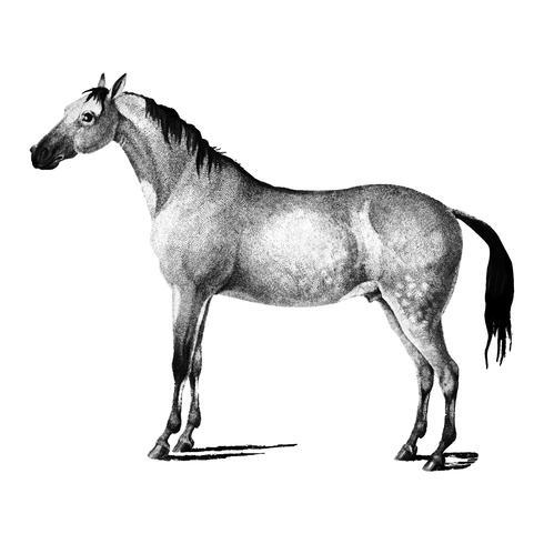 Vintage illustraties van paard