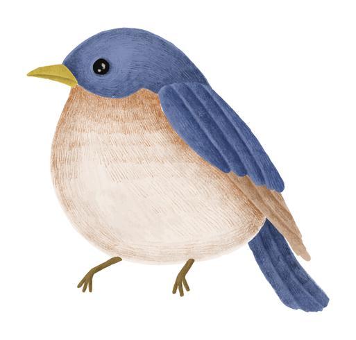 Handgetekende Tickell's blauwe vliegenvanger