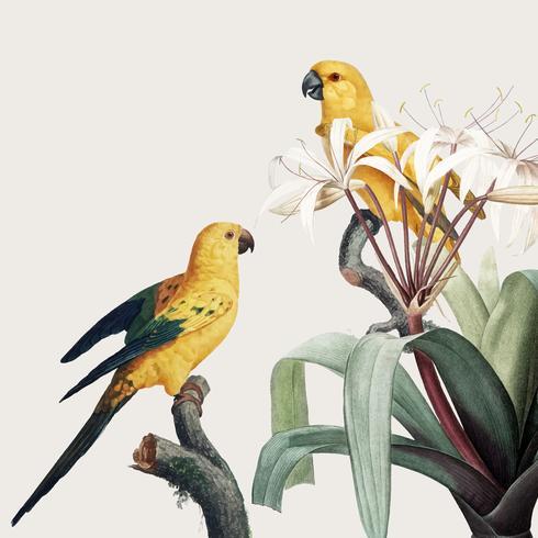 Macaw tropical illustration