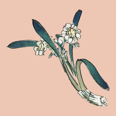 Bunchflower påsklilja av K? No Bairei (1844-1895). Digitalt förbättrad från vår egen ursprungliga 1913-upplagan av Bairei Gakan.