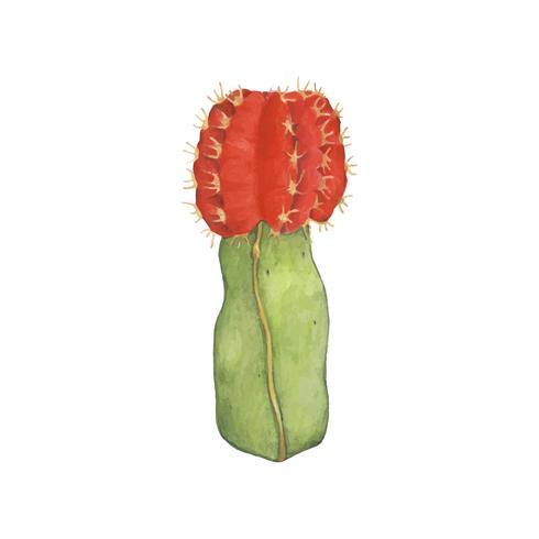 Dibujado a mano gymnocalycium mihanovichii luna Cactus