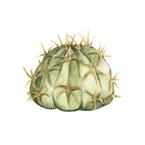 Dibujado a mano equinopsis cactus calochlora