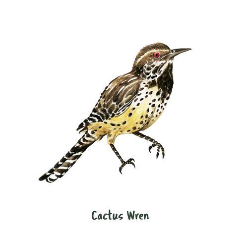 Mão desenhada cactus wren bird