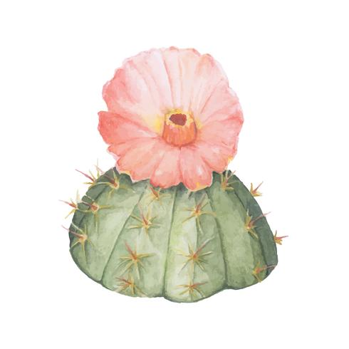 Hand drawn gymnocalycium erinaceum chin cactus