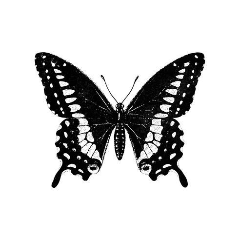 Ilustración de una mariposa