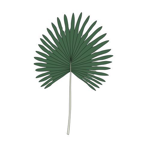 Illustration d'une feuille de palmier