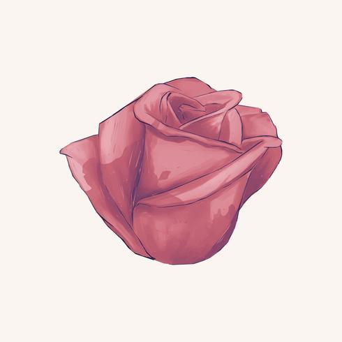 Illustration of drawing red rose flower