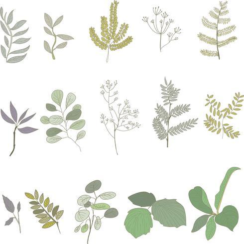 Sammlung von Pflanzen