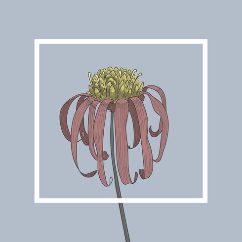 Illustration av husplanter