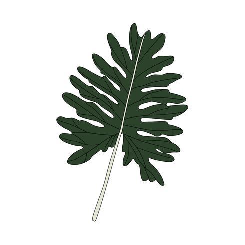Ilustração da folha de Philodendron Xanadu