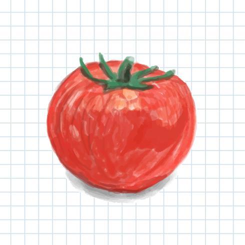 Hand drawn tomato watercolor style