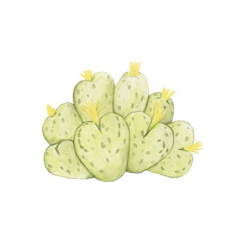 Hand getrokken conophytum uviforme dwerg overblijvende vetplant