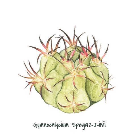 Hand gezeichneter gymnocalycium spegazzinii Kaktus