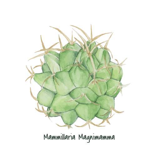 Cactus di puntaspilli messicano disegnato a mano
